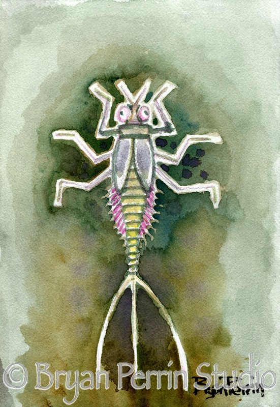 """Mayfly"" Watercolor on paper"